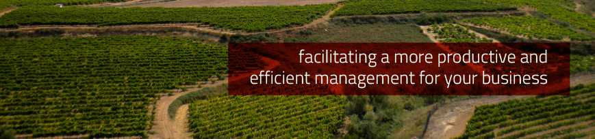 Facilitating a more productive and efficient management for your business
